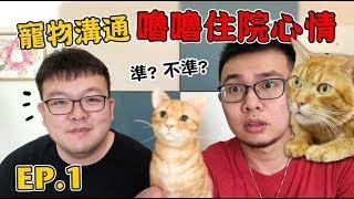 【寵物溝通EP1,嚕嚕住院心情】志銘與狸貓