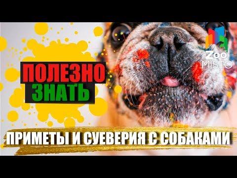 Полезно знать с ZooMISTO | Приметы и суеверия с собаками