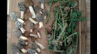 First Morels of 2013