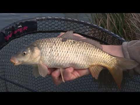 Mais Pescaviva nelle fisheries (Pescaviva)