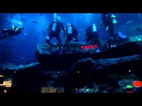 Aquarium, Dubai,Vereinigte Arabische Emirate