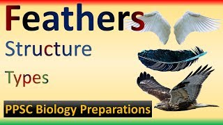Birds Feathers | Structure | Types | Feather Vs Wing