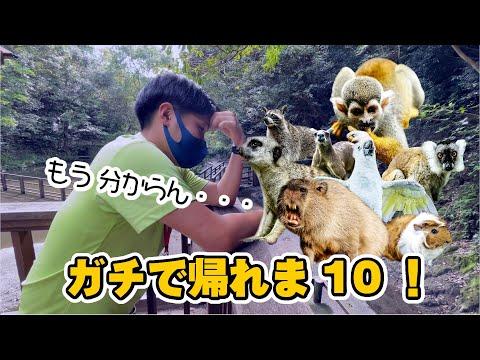【結果発表】人気動物トップ10あてるまで帰れま10やったら過酷すぎた…【大波乱】