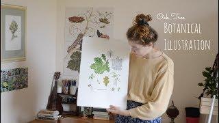 Vlog: Botanical Illustration • Oak Tree // Part 2