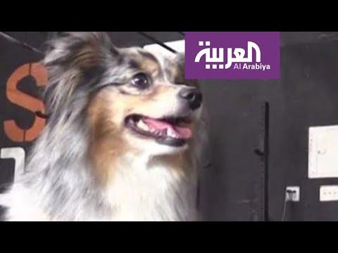 العرب اليوم - كلبة مذهلة تدهشك بحركاتها الرائعة