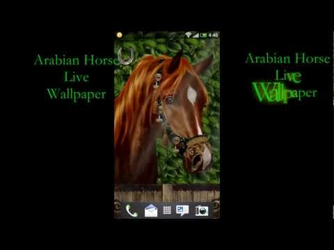 Video of Arabian Horse Free Wallpaper