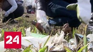 Субботник в Год экологии: Россию приводят в порядок