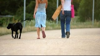 How to Walk your Dog in HOT WEATHER