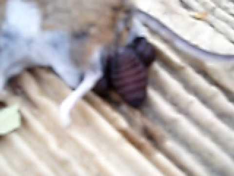 Magandang paghahanda mula sa mga worm na pusa