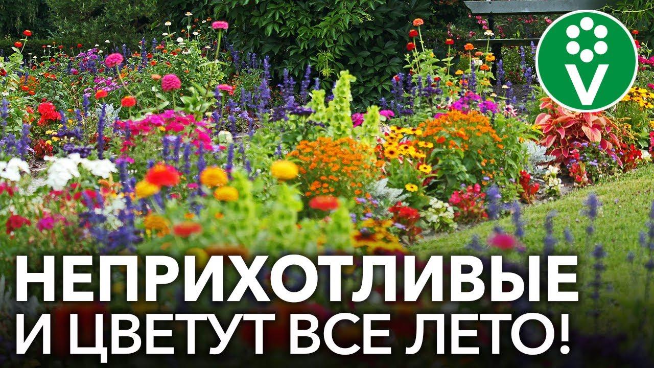 ЛЕНИВАЯ КЛУМБА! Лучшие однолетние цветы, которые непременно стоит посеять