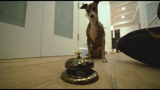 teaching our dogs to ring a bell for treats