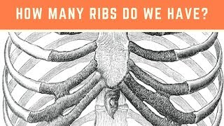 How many ribs do we have? Ribs and the Rib cage