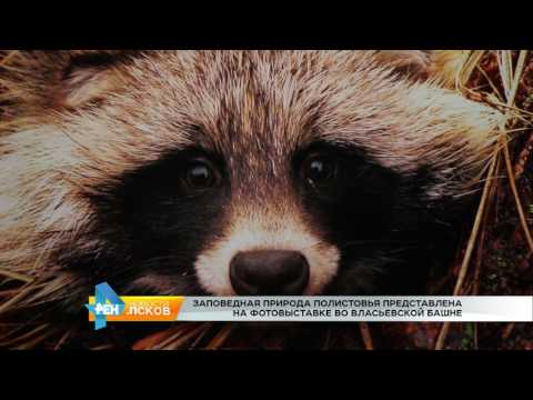 Новости Псков 16.03.2017 # Выставка заповедной природы Полистовья