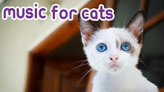 Cat Music Early Christmas Special, Get Your Feline in the Mood this Xmas