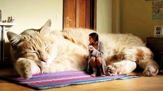 Die 10 größten Katzen der Welt