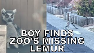 5-year-old finds lemur that went missing from San Francisco Zoo