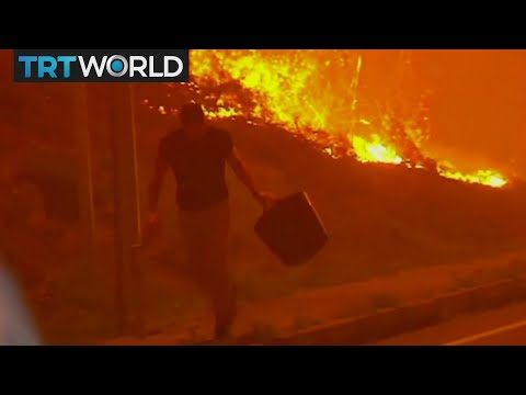 Europe Wildfires: Portugal and Spain battle deadly fires