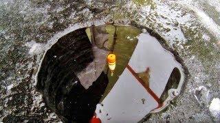Ловля на поплавочную удочку зимой плотвы