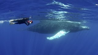 Humpback Whales | JONATHAN BIRDS BLUE WORLD