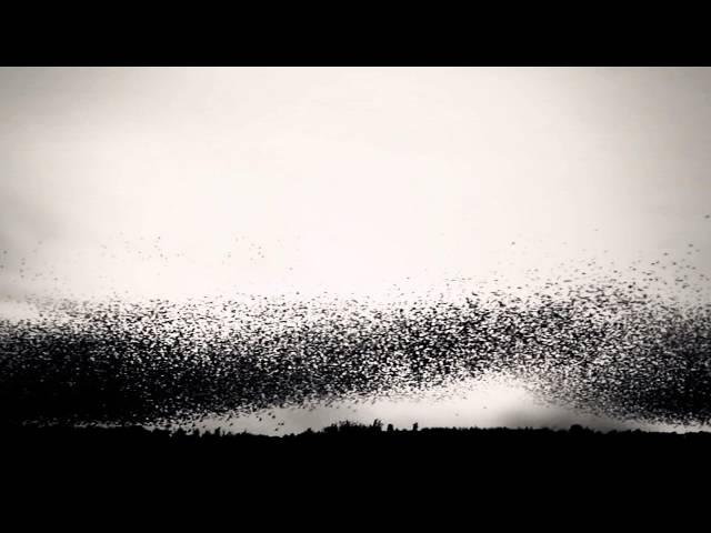 Starlings Over Brighton Pier - Bell X1