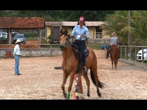 Veja os benefícios da Doma racional de cavalos