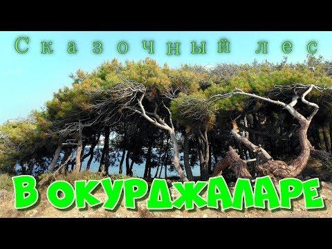 Сказочный лес в Окурджаларе
