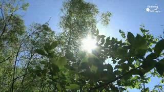УЛЫБАЕТСЯ ПРИРОДА Солнечное утро для настроения ????