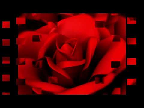 Футаж краные розы