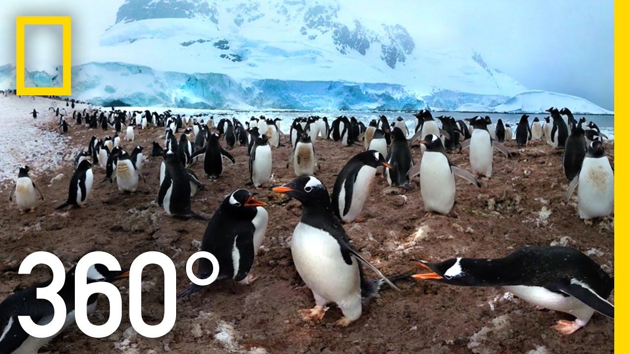 Vamos de viaje a la Antártida, el vídeo más salvaje de la naturaleza