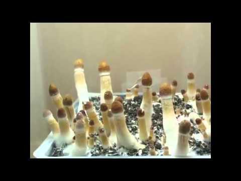 Nail tools fungus kamay