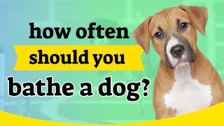 It is very important to know how often should you bathe a dog?.