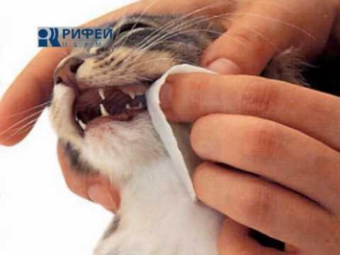 Сюжет Чистка зубов у собак и кошек 26 07 12
