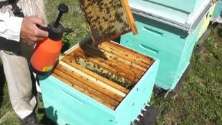 вирусный паралич пчёл