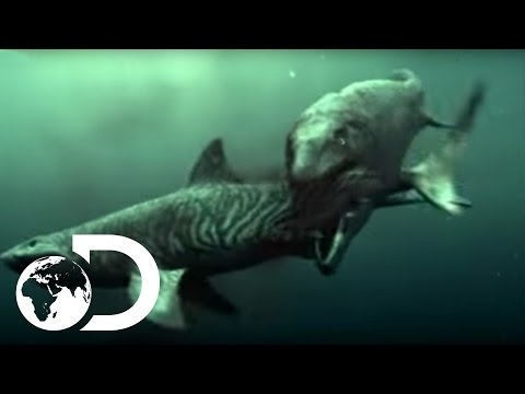 Mosasaur Shark Attack - Reign of the Dinosaurs