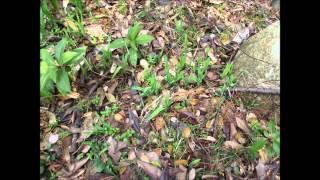 山口県周南市西緑地公園植物観察会の紹介2013-2-3