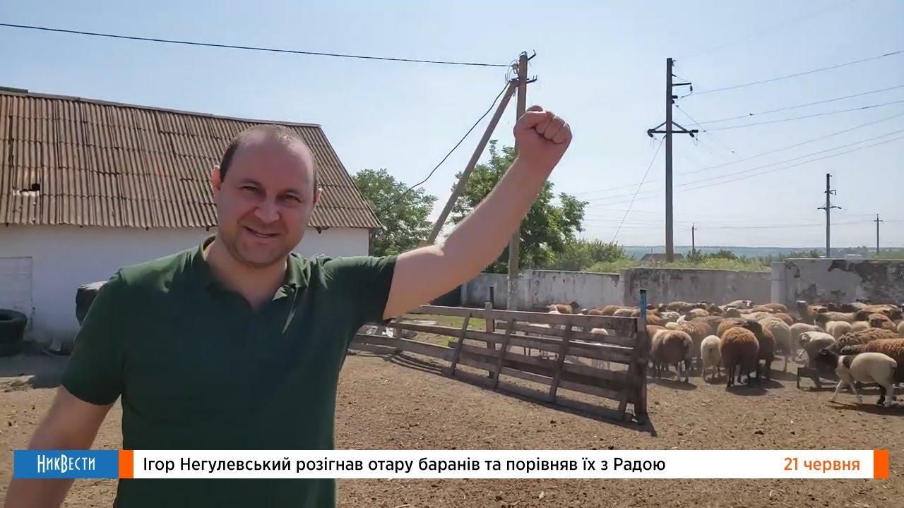 Негулевский о депутатах ВР