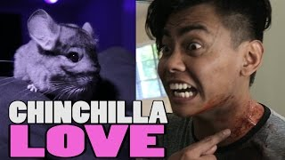 CHINCHILLA LOVE