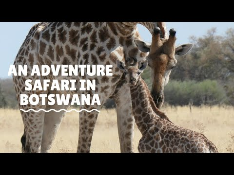 Adventure Safari with Brave Africa