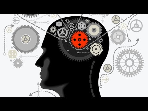 Intriguing Facts About the Human Brain