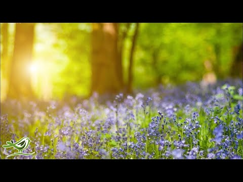 Download Relaxing Piano Music Beautiful Relaxing Music Sleep