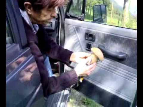 La valutazione di mezzi da un fungo di piede