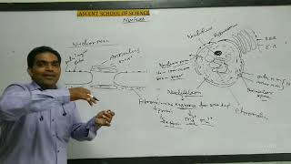 Nucleus Structure | Nuclear Membrane | Nucleoplasm | Biology | By Sing Sir