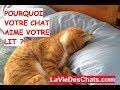 Pourquoi votre chat ? aime votre lit ? Kdo bonus :)