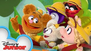 Backyard Safari | Muppet Babies | @Disney Junior