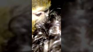 Boiling Live Animals Liveleak