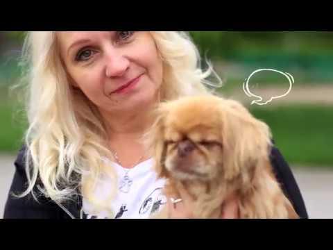Šerbedžija u spotu za pomoć azilu za pse Nišlije Saše Pešića
