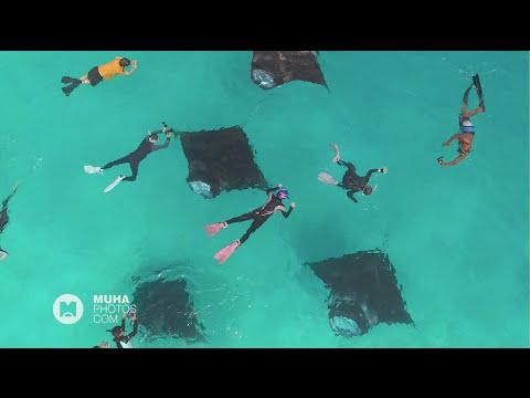 Feeding Franzy: Manta Rays at Hanifaru Bay , Baa Atoll, Maldives