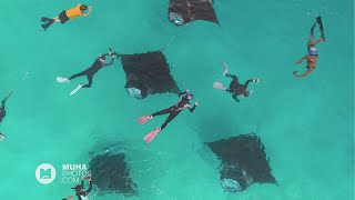 Feeding Franzy: Manta Rays at Hanifaru Bay , Baa Atoll, Maldives