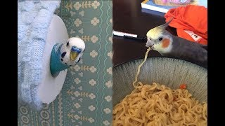 Cute Parrots Videos Compilation cute moment of the animals - Soo Cute! #5