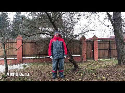 Зачем нужна обрезка плодовых деревьев?